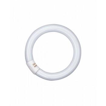 Świetlówka kołowa Lamp T8c 22W/827