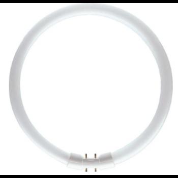Świetlówka kołowa Lamp TL5 40W/840 2GX13